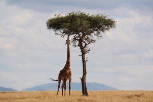 Cómo elegir un seguro medico para viajar a África